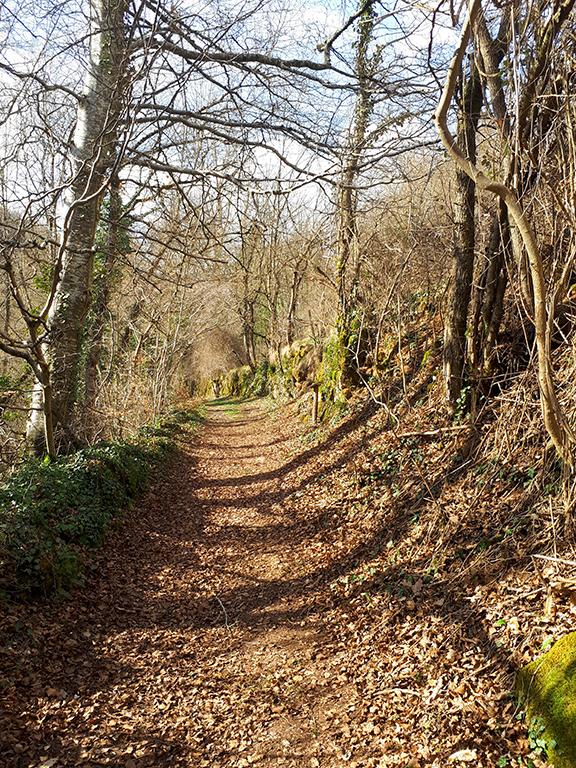 Saint Léons sentier en forêt