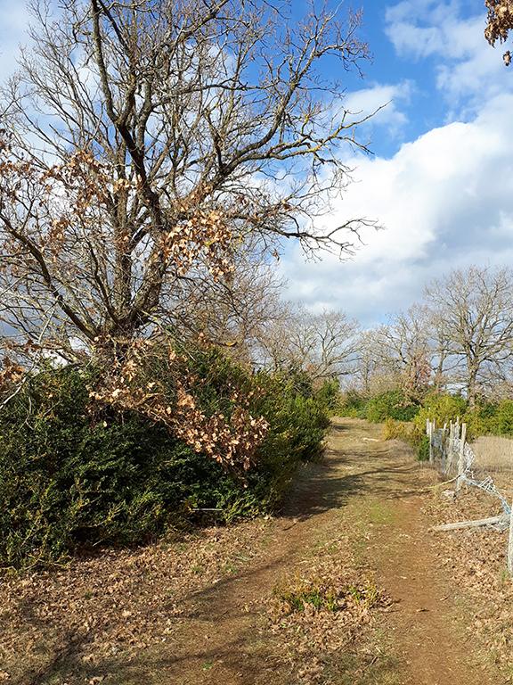 Saint Léons chemin pédestre
